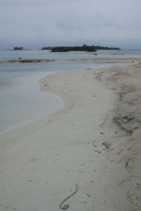 Maadhoo Island, South Male Atoll, November 2015. Photo: Lindsay Bremner.